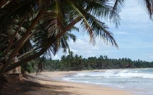 pláž palmy Indický oceán