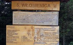 Wlosienica