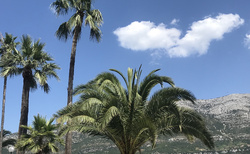 vysoké i nizké palmy
