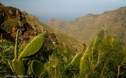Jedlé kaktusy z rodu opuncie najdete jak v Jižní Americe, tak i zde :)