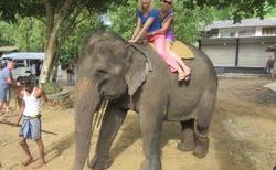 na slonovi