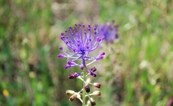 Neznámý, ale krásný květ